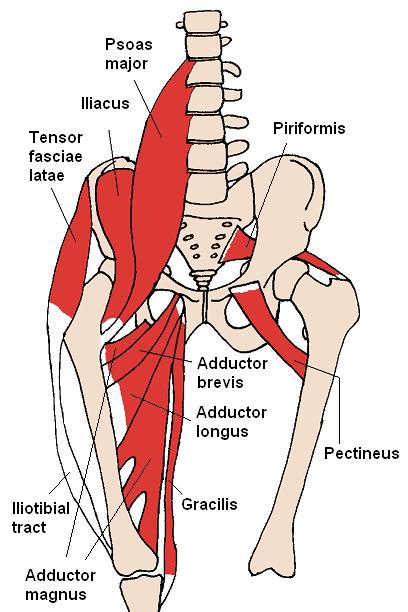 Mišići